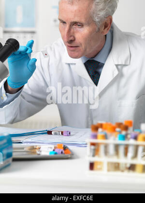 Doctor looking at patients blood slide under microscope with other samples for testing - Stock Photo