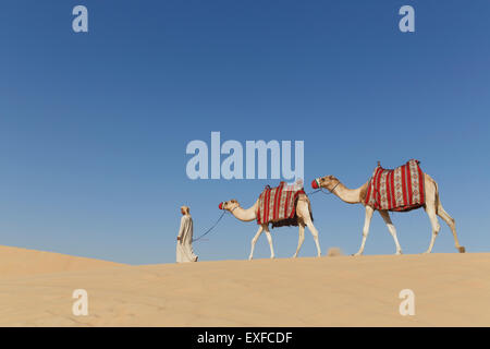 Bedouin walking with two camels in desert, Dubai, United Arab Emirates - Stock Photo
