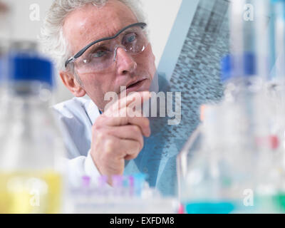 Scientist viewing DNA autoradiogram experiment in laboratory