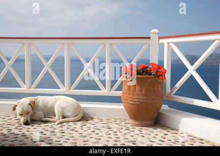 Dog sleeping on balcony with sea view, Oia, Santorini, Cyclades, Greece - Stock Photo