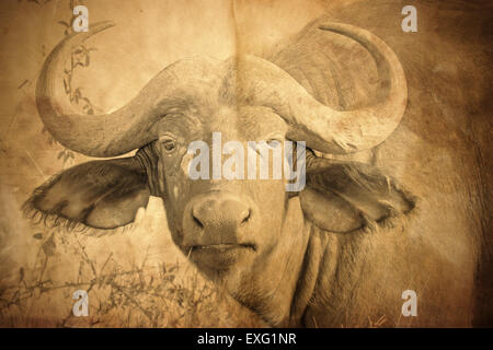 Portrait of an african buffalo, Syncerus caffer, Sepia tone vintage image with grunge effect. - Stock Photo