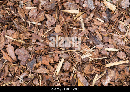 Natural bark used as a soil covering for mulch in the garden, wood chip background texture - Stock Photo
