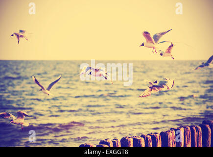 Vintage retro filtered birds on the sea, nature background, old film effect. - Stock Photo