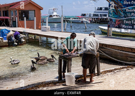 Local fishermen cleaning fish on the beach of in San Pedro, Ambergris Caye, Belize, Central America. - Stock Photo