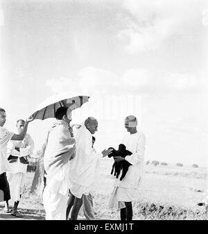 Mahatma Gandhi fondling a newborn two hours old goat carried by ashramite Balwant Singh ; September 1938 NOMR - Stock Photo