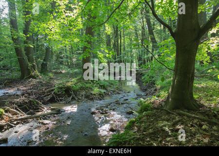 Creek in the forest of Little Carpathian - Slovakia - Stock Photo