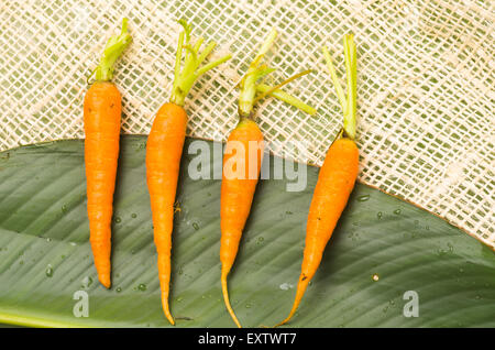 Four fresh aligned carrots placed on a big green leaf and rustic hemp fabric - Stock Photo