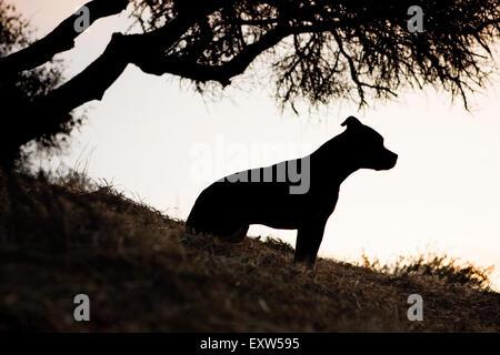 Silhouette profile medium adult dog sitting under silhouette tree on hillside - Stock Photo