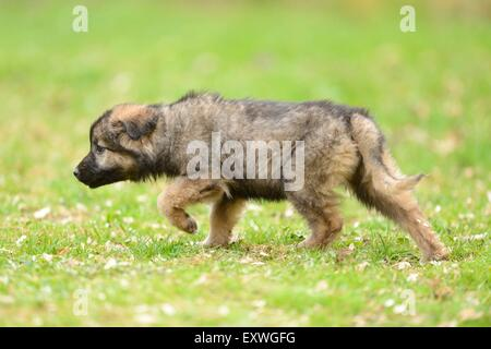 Mixed breed dog puppy in a garden - Stock Photo