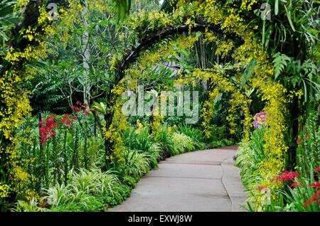 Orchid garden, Singapur City, Singapur, Asia - Stock Photo