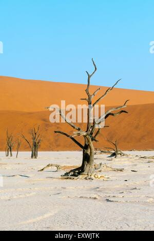 Landscape with dead Acacia trees and red sand dune, Namib Naukluft Park, Namibia - Stock Photo