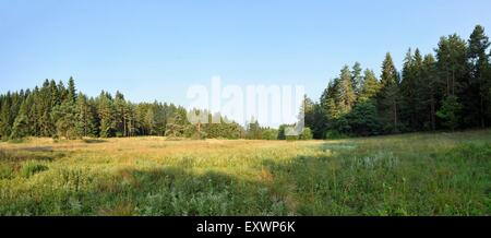 Meadow and forest in Upper Palatinate, Bavaria, Germany - Stock Photo