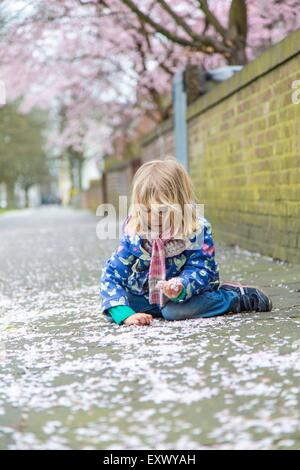 Girl collecting cherry blossoms, Kiel, Schleswig-Holstein, Germany, Europe - Stock Photo