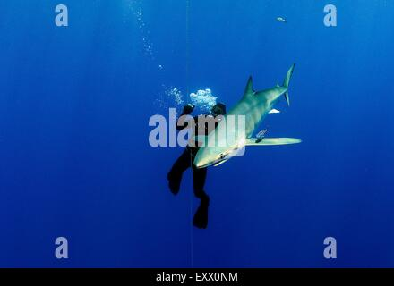Female diver and blue shark, Prionace glauca, Azores, Portugal, Europe