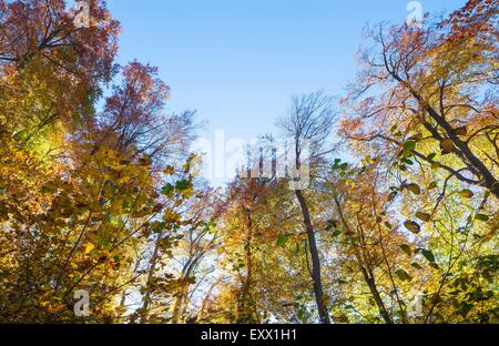 Woodland in autumn, Moenchsberg, Salzburg, Austria, Europe - Stock Photo