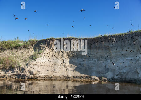 River-bank with breeding grounds of sand martins. - Stock Photo