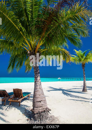 Deck chairs under umrellas and palm trees on a tropical beach - Stock Photo