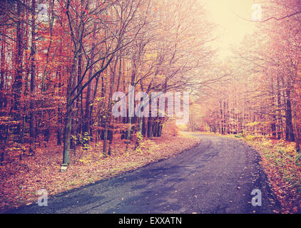 Vintage toned picture of a road in autumnal forest. - Stock Photo