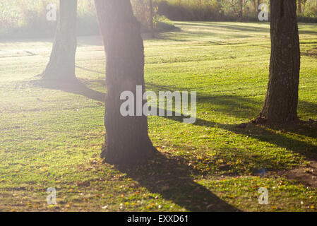 Trees casting shadows on grass - Stock Photo