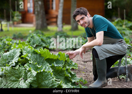 View of a Young attractive farmer harvesting rhubarb - Stock Photo