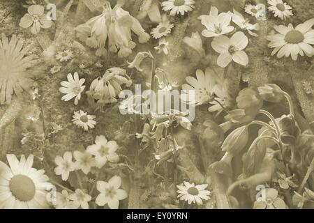 Pretty wild flowers montage in sepia. - Stock Photo