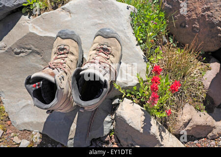 Old hiking boots on a rock next to mountain wildflowers - Stock Photo