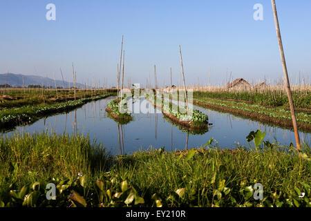 Floating gardens in Inle Lake, Shan State, Myanmar - Stock Photo
