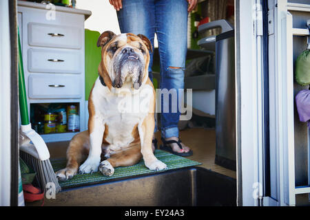 Portrait of bulldog and womans legs in trailer doorway - Stock Photo