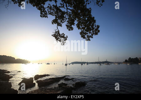 A view of a group of sailboats anchored in the Adriatic sea with silhouette of a tree branch at sunset in Rovinj, - Stock Photo