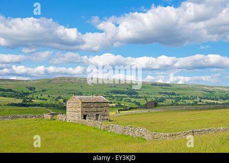 Farming landscape, Wensleydale, Yorkshire Dales National Park, North Yorkshire, England UK - Stock Photo