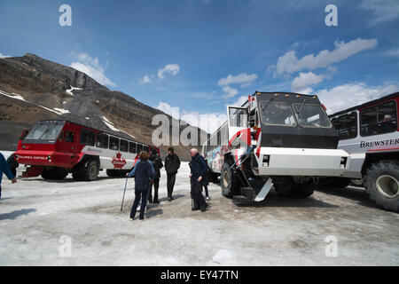 Snow Coaches.  The beautiful gentle 25 tonne/ton butterflies that take you on and off the Athabasca Glacier, Alberta, - Stock Photo