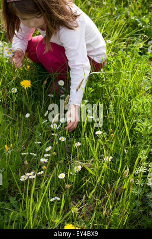 Young Girl Picking Daisies in Field - Stock Photo
