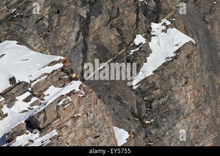 Lammergeiers mating - Swiss Alps - Stock Photo