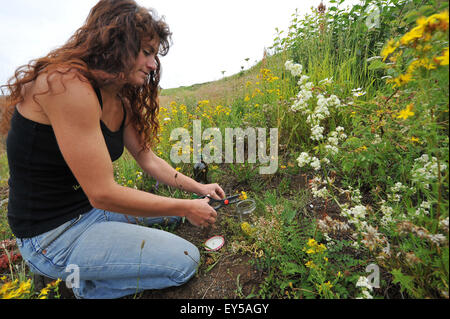 Herbalist collecting - Auvergne France Laure Barthomeuf - Stock Photo