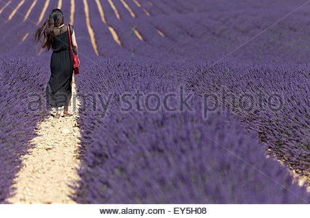 Young woman in lavender field - France - Stock Photo