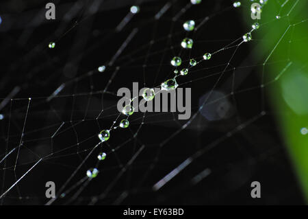 Macro photograph of a spiderweb and vegetation covered by rain droplets - Stock Photo