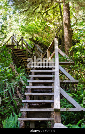 Wooden stairs on a trail through the coastal temperate rainforest near Long Beach and Tofino, In British Columbia, - Stock Photo