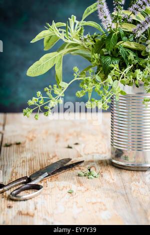 Fresh herbs from garden. Selective focus. - Stock Photo