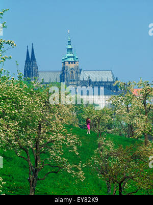 Woman alone among apple trees in blossom on Petrin Hill in Prague with St Vitu s Cathedral and Hradcany Castle - Stock Photo