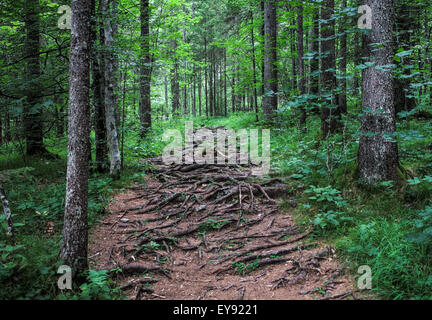Footpath in a forest - Stock Photo
