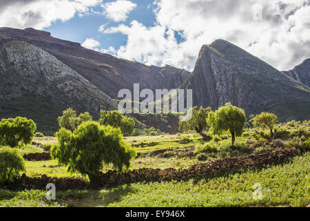 The late afternoon sun lights up the trees and landscape; Toro Toro, Bolivia - Stock Photo