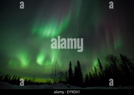 The green glow of the Aurora Borealis (Northern Lights) from the Petersville Road, Southcentral Alaska, Winter - Stock Photo