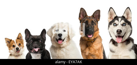Close-up on dogs head in front of a white background - Stock Photo