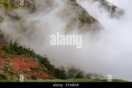 Alpine plants in bloom along the Himalayan mountain slopes shrouded in cloud and mist near Sela Pass - Stock Photo