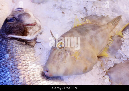 Leatherjacket fish Parika scaber ) on display in fish market.Food background texture. - Stock Photo