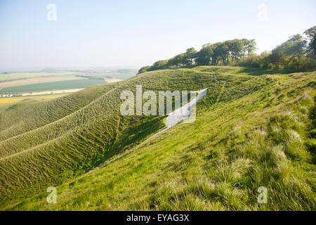 White horse in chalk scarp slope Cherhill, Wiltshire, England, UK dating form 1780 - Stock Photo
