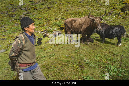 Brokpa nomads herd yak cattle along the grazing pastures of the Himalayan mountain slopes in Arunachal Pradesh, - Stock Photo