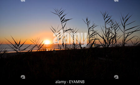 Panoramic sunset in the Atlantic sea with backlighted reeds from the dunes of El Palmar Beach (El Palmar de Vejer, - Stock Photo