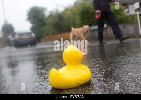 Wimbledon London, UK. 26th July 2015. A Pedestrian with a dog walk past a rubber duck on a wet rainy day in London - Stock Photo