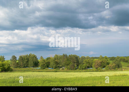 Old rural cemetery in the trees in the middle of grass meadows under the cloudy sky on a sunny summer day. - Stock Photo